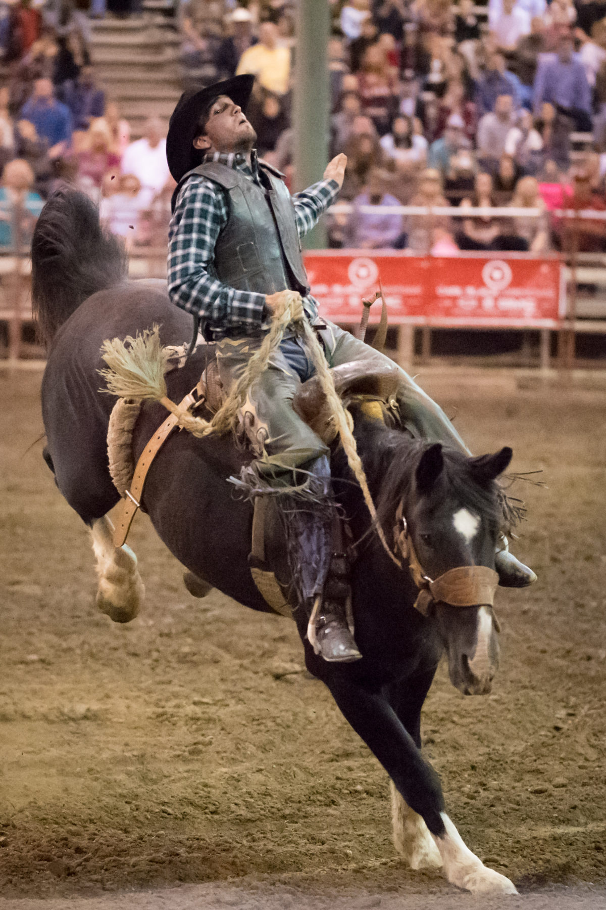 Nikon D5 ISO 64000 bails me out with a Rodeo